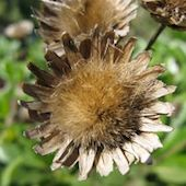 dried-flower-721462-m