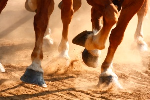 Running Horses Hooves