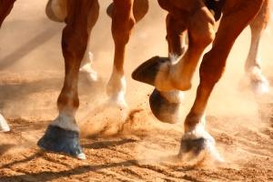 Running Horses Hooves